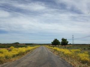 Two lane road heaven.