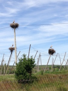 Storks with babies...no diapers sighted.