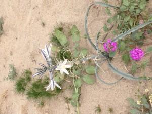 Desert lilies were viewed.